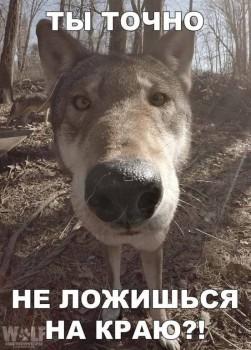 Доброе утро - приятных снов  - image (16).jpg
